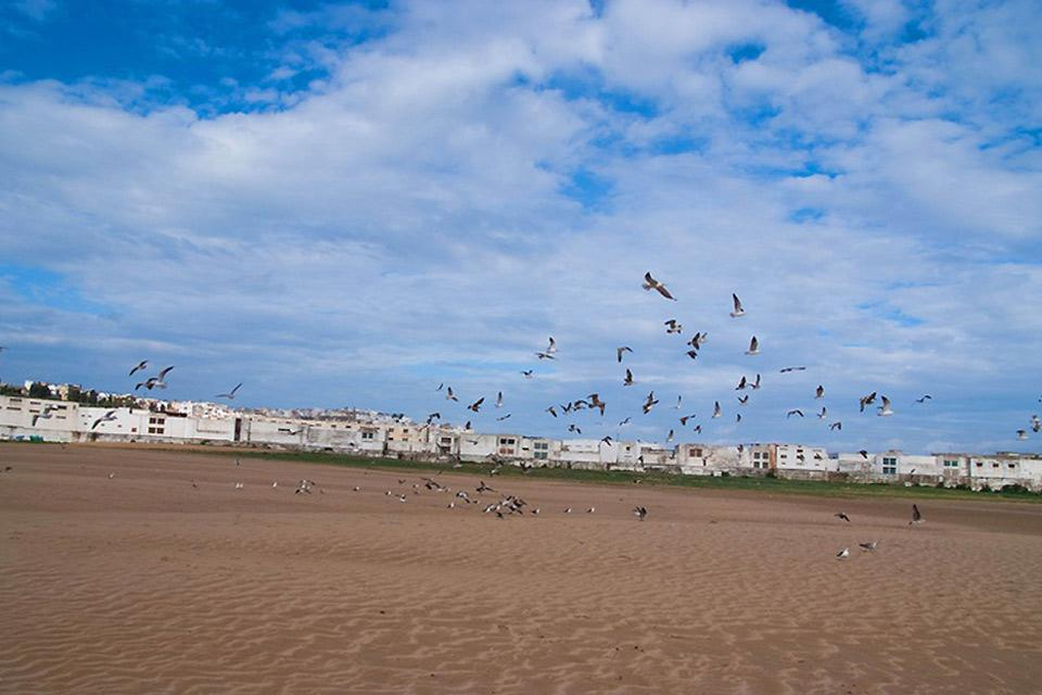 Seagulls have free reign of the beach in the early morning