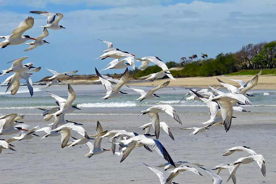 Estos últimos años, el pueblecito de pescadores en la costa pacífica se ha transformado en una ciudad de veraneo de moda, que sigue creciendo ante la afluencia de turistas. A lo largo de Tamarindo se extiende una gran playa de arena dorada y fina, a la sombra de los tamarindos. Aquellos que practican surf y windsurf disfrutan en las olas antes de probar cerca de las zonas de práctica más ventosas. ...