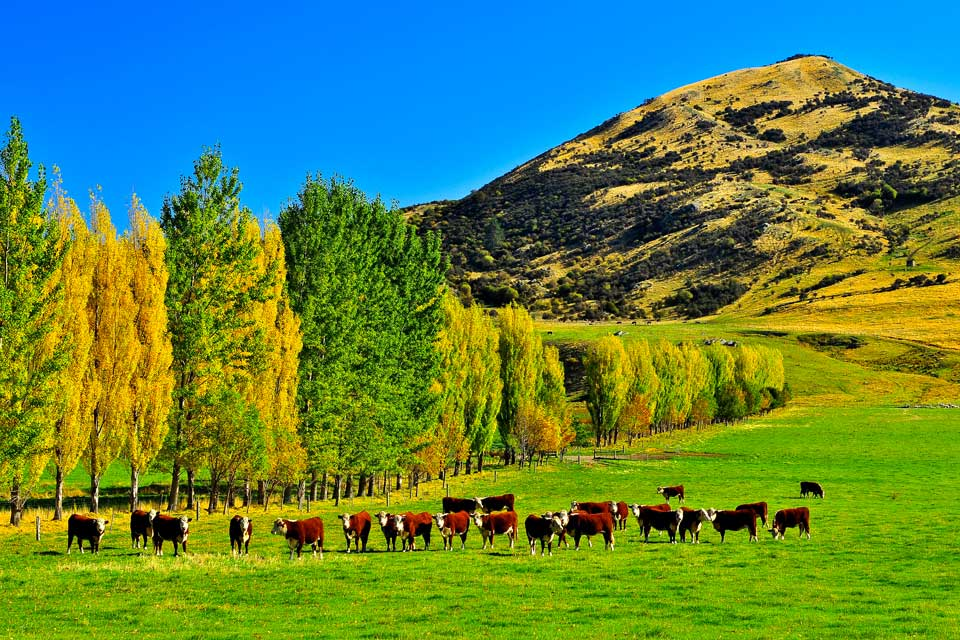 Queenstown benefits from a very natural and green setting. You can go on an outing on Lake Wakatipu.