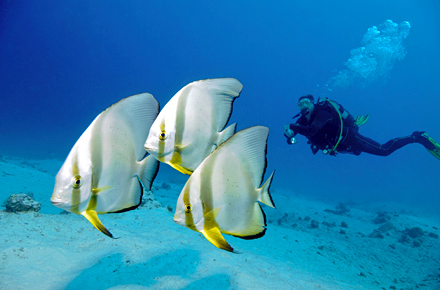 EGYPT. Scuba diving, Sharm el Sheikh.