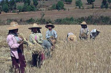 La recepción en Myanmar
