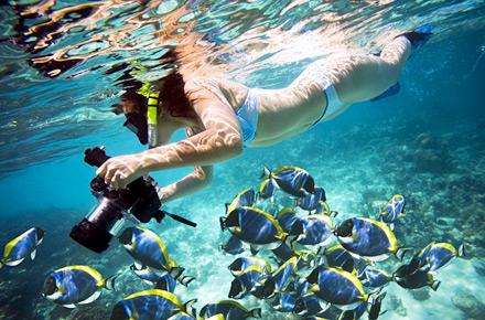 Practica el Snorkeling en Antigua