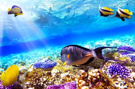 Plongeon en mer Rouge