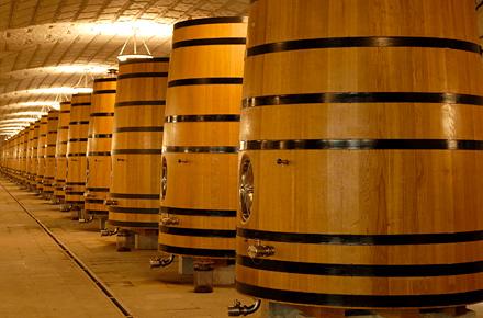 Dentro botti di vino