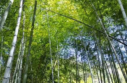 Il giardino dei bambù