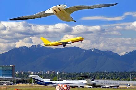 Sì o no: Gli stormi di uccelli in volo sono pericolosi