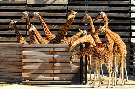 Le Zoo de Vincennes réouvre ses portes