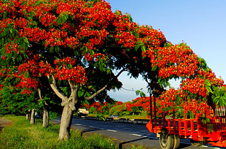 Le Tampon, Réunion