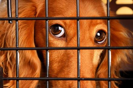 Was machen Tierbesitzer?