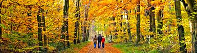 10 bonnes raisons d'aimer l'automne en France