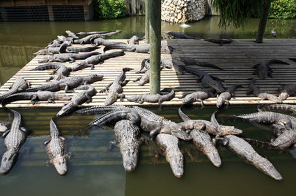 Crocworld, South Africa