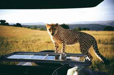 From Kruger to Cape Town