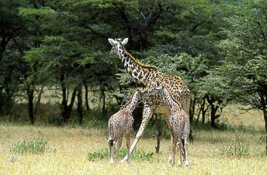 The Tanzanian parks