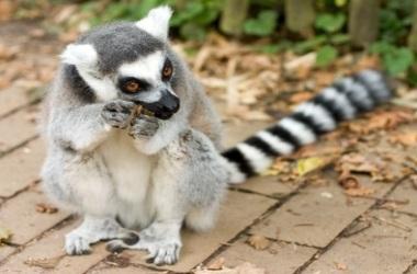 Madagascar's wealth