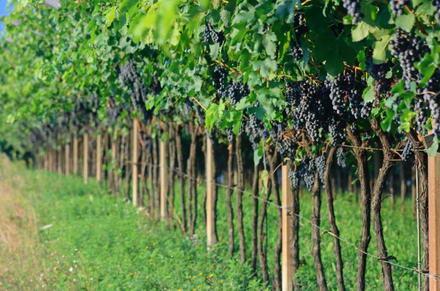 In Vino Veritas: la strada dei vini italiani