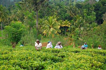 Back to nature in Sri Lanka.