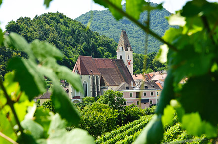 Austria: le ultime vendemmie a San Martino