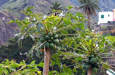 Sanfter Tourismus auf La Gomera