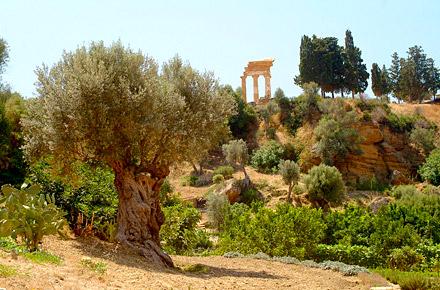 Sicilia: passeggiando nel giardino degli Dei (ad Agrigento)