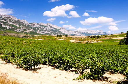 Wine country, Aguilar del Rio Alhama in the Rioja